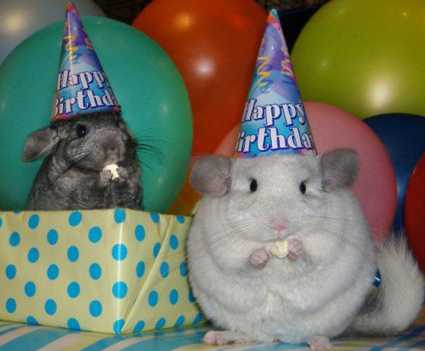 Birthday hamsters