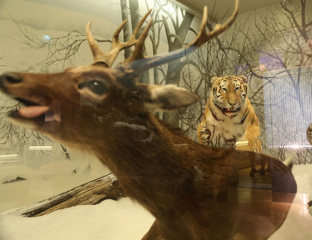 Museum Of Natural History Helsinki